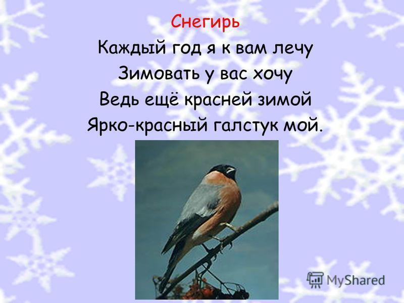 Снегирь Каждый год я к вам лечу Зимовать у вас хочу Ведь ещё красней зимой Ярко-красный галстук мой.