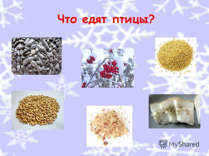 Что едят птицы?