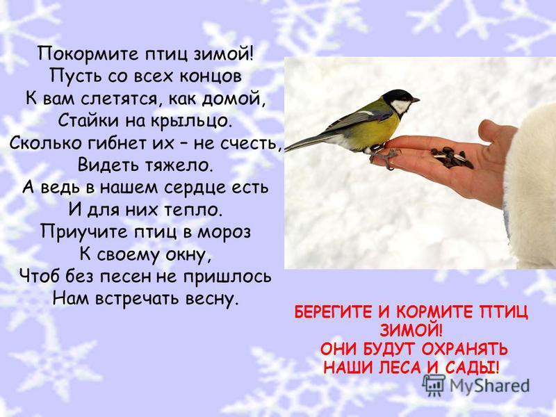 Покормите птиц зимой! Пусть со всех концов К вам слетятся, как домой, Стайки на крыльцо. Сколько гибнет их – не счесть, Видеть тяжело. А ведь в нашем сердце есть И для них тепло. Приучите птиц в мороз К своему окну, Чтоб без песен не пришлось Нам вст