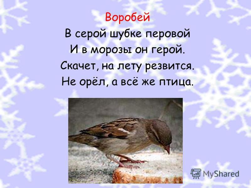 Воробей В серой шубке перовой И в морозы он герой. Скачет, на лету резвится. Не орёл, а всё же птица.