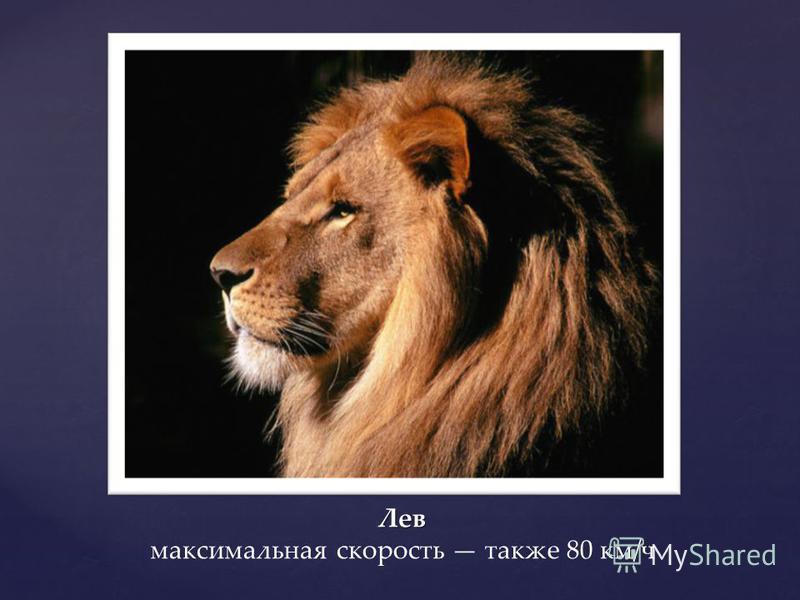 Лев Лев максимальная скорость также 80 км/ч