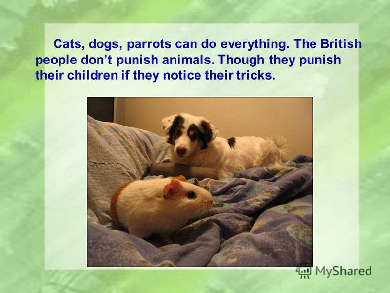Cats, dogs, parrots can do everything. The British people dont punish animals. Though they punish their children if they notice their tricks.