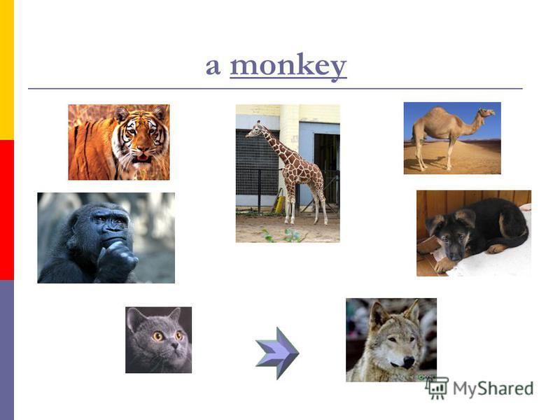 Урок в 4 классе «Животные и места их обитания»