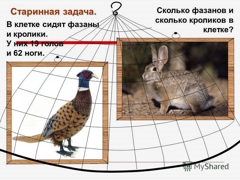 В клетке сидят фазаны и кролики. У них 19 голов и 62 ноги. Старинная задача. Сколько фазанов и сколько кроликов в клетке?