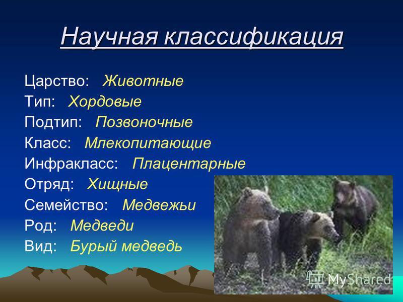 Научная классификация Царство: Животные Тип: Хордовые Подтип: Позвоночные Класс: Млекопитающие Инфракласс: Плацентарные Отряд: Хищные Семейство: Медвежьи Род: Медведи Вид: Бурый медведь