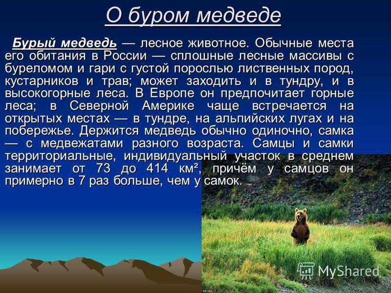 О буром медведе Бурый медведь лесное животное. Обычные места его обитания в России сплошные лесные массивы с буреломом и гари с густой порослью лиственных пород, кустарников и трав; может заходить и в тундру, и в высокогорные леса. В Европе он предпо