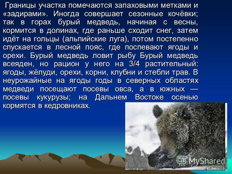 Границы участка помечаются запаховыми метками и «задирами». Иногда совершает сезонные кочёвки; так в горах бурый медведь, начиная с весны, кормится в долинах, где раньше сходит снег, затем идёт на гольцы (альпийские луга), потом постепенно спускается