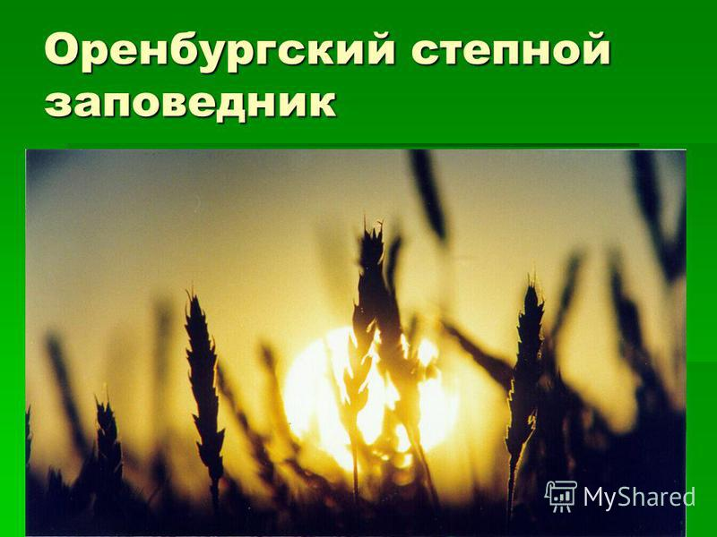 Оренбургский степной заповедник