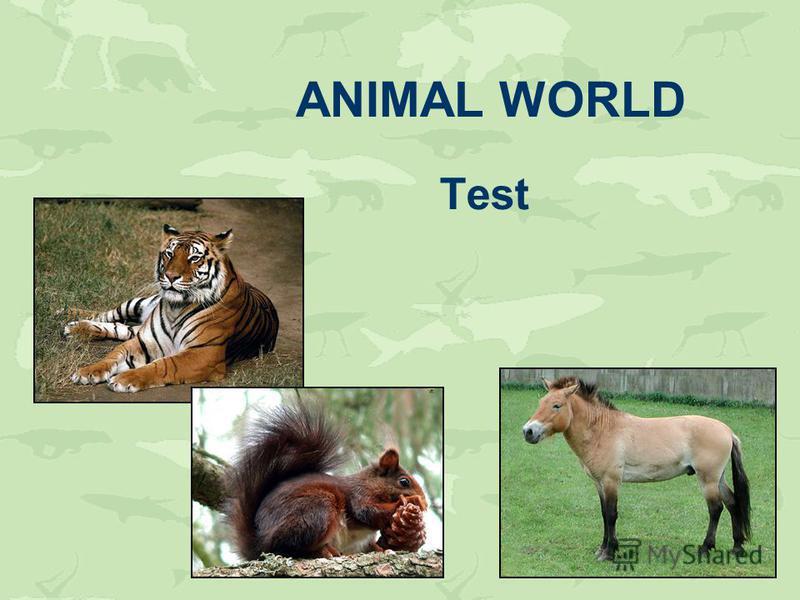 ANIMAL WORLD Test