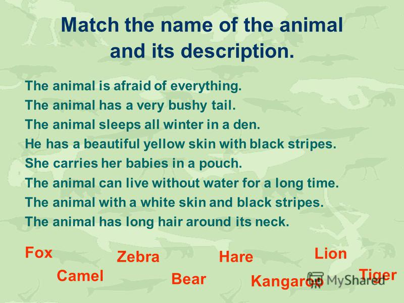 Match the name of the animal and its description. The animal is afraid of everything. The animal has a very bushy tail. The animal sleeps all winter in a den. He has a beautiful yellow skin with black stripes. She carries her babies in a pouch. The a