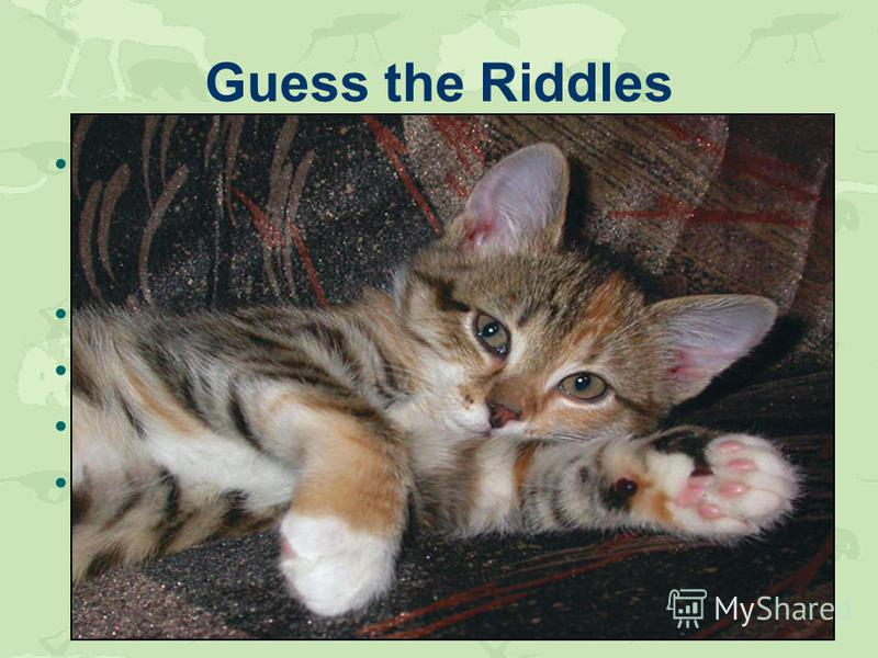 Guess the Riddles Long ears, long ears. They like carrots. They like hay. They grow longer from day to day. Who is the king of the animal world? It is a domestic animal. It likes fish. This animal likes grass, gives milk. He is not a tailor, but carr