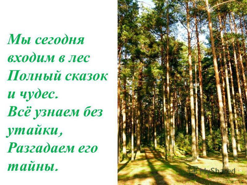 Мы сегодня входим в лес Полный сказок и чудес. Всё узнаем без утайки, Разгадаем его тайны.