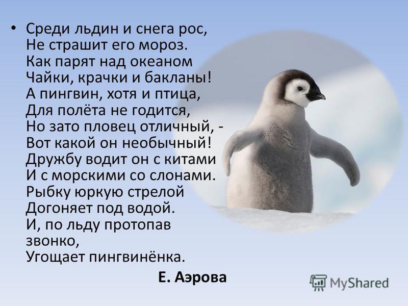 Среди льдин и снега рос, Не страшит его мороз. Как парят над океаном Чайки, крачки и бакланы! А пингвин, хотя и птица, Для полёта не годится, Но зато пловец отличный, - Вот какой он необычный! Дружбу водит он с китами И с морскими со слонами. Рыбку ю