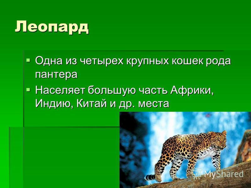 Леопард Одна из четырех крупных кошек рода пантера Населяет большую часть Африки, Индию, Китай и др. места