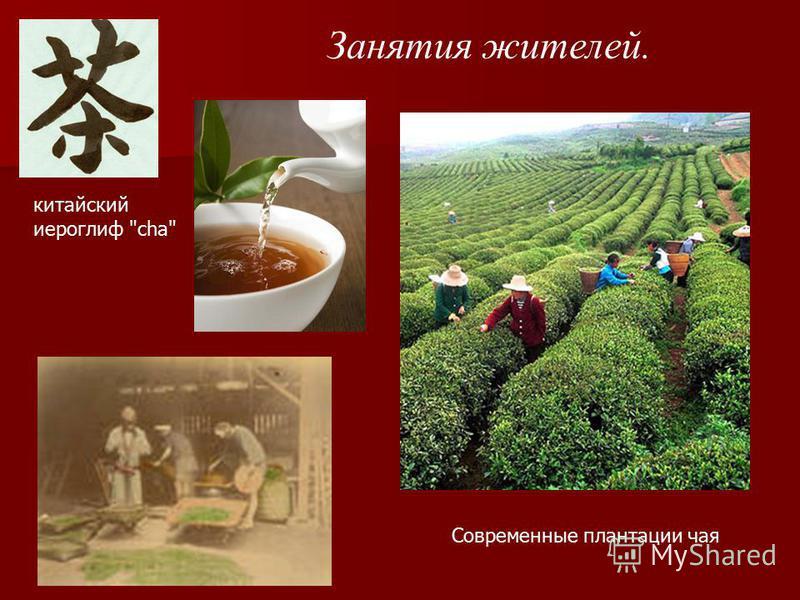 Занятия жителей. китайский иероглиф cha Современные плантации чая