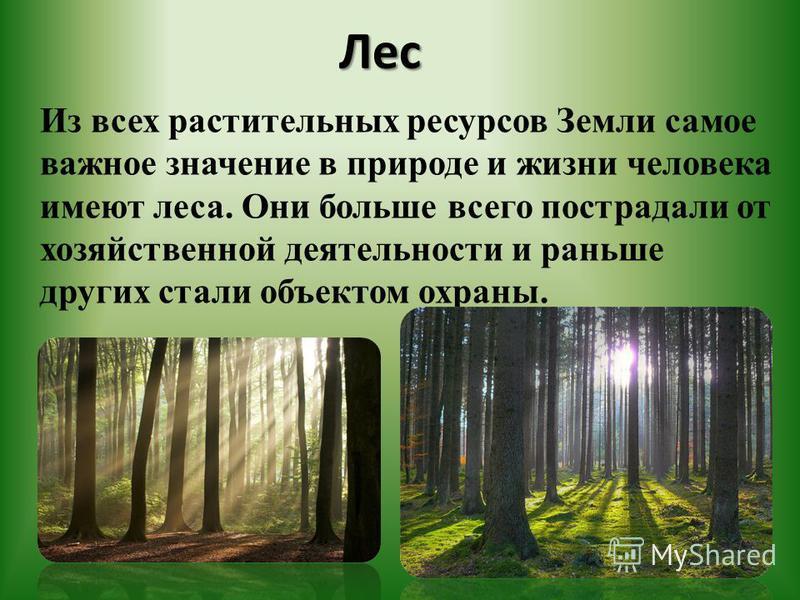 Лес Лес Из всех растительных ресурсов Земли самое важное значение в природе и жизни человека имеют леса. Они больше всего пострадали от хозяйственной деятельности и раньше других стали объектом охраны.