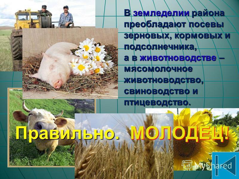 Сельское хозяйство Структура сельскохозяйственных угодий Донецкой области: пахотные земли 80,2 %пахотные земли 80,2 % пастбища 12,6 %пастбища 12,6 % сенокосы 4,9 %сенокосы 4,9 % многолетние насаждения (сады и др.) 2,1%многолетние насаждения (сады и д