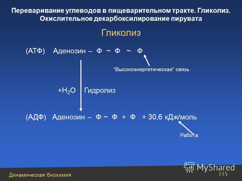 Динамическая биохимия Переваривание углеводов в пищеварительном тракте. Гликолиз. Окислительное декарбоксилирование пирувата 115 (АТФ) Аденозин – Ф ~ Ф ~ Ф Высокоэнергетическая связь +Н 2 О Гидролиз (АДФ) Аденозин – Ф ~ Ф + Ф + 30,6 к Дж/моль Работа