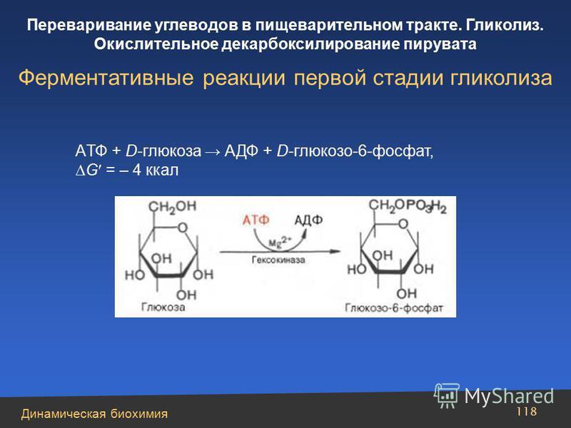 Динамическая биохимия Переваривание углеводов в пищеварительном тракте. Гликолиз. Окислительное декарбоксилирование пирувата 118 AТФ + D-глюкоза АДФ + D-глюкозо-6-фосфат, G = – 4 ккал Ферментативные реакции первой стадии гликолиза