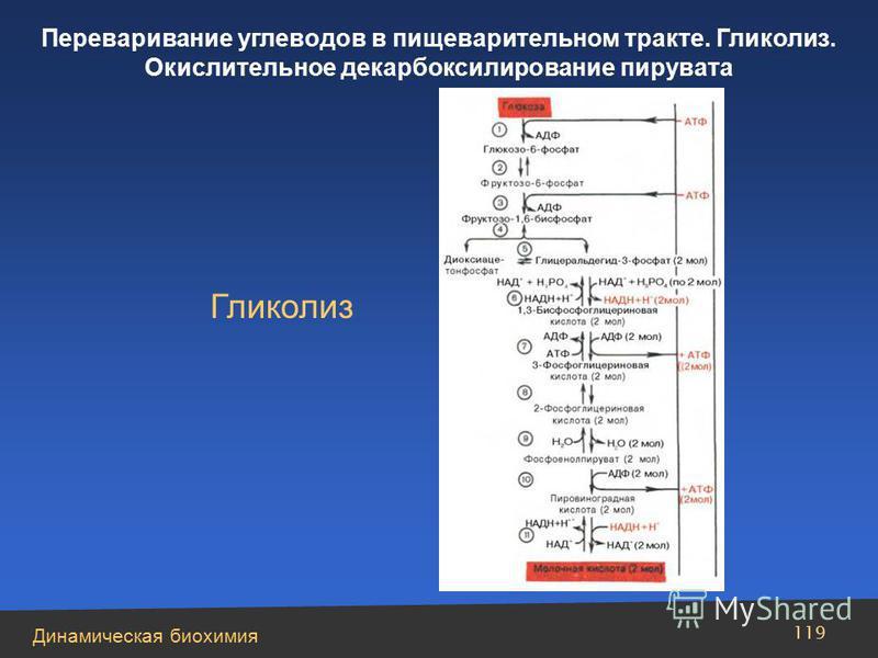 Динамическая биохимия Переваривание углеводов в пищеварительном тракте. Гликолиз. Окислительное декарбоксилирование пирувата 119 Гликолиз