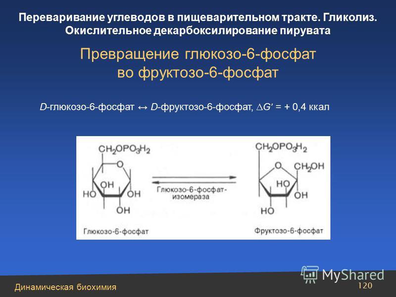 Динамическая биохимия Переваривание углеводов в пищеварительном тракте. Гликолиз. Окислительное декарбоксилирование пирувата 120 Превращение глюкозо-6-фосфат во фруктозо-6-фосфат D-глюкозо-6-фосфат D-фруктозо-6-фосфат, G = + 0,4 ккал