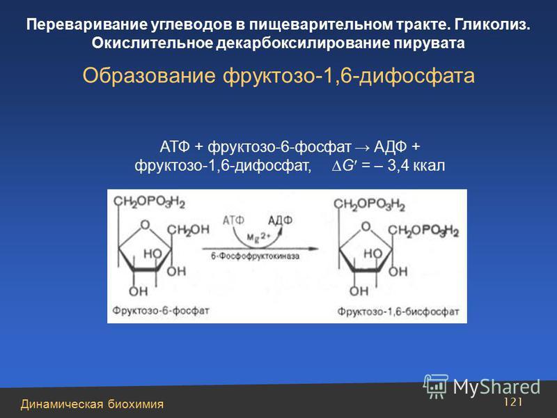 Динамическая биохимия Переваривание углеводов в пищеварительном тракте. Гликолиз. Окислительное декарбоксилирование пирувата 121 АТФ + фруктозо-6-фосфат АДФ + фруктозо-1,6-дифосфат, G = – 3,4 ккал Образование фруктозо-1,6-дифосфата
