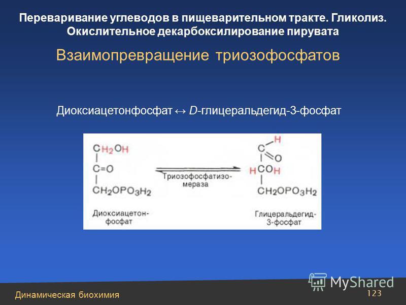 Динамическая биохимия Переваривание углеводов в пищеварительном тракте. Гликолиз. Окислительное декарбоксилирование пирувата 123 Взаимопревращение триозофосфатов Диоксиацетонфосфат D-глицеральдегид-3-фосфат