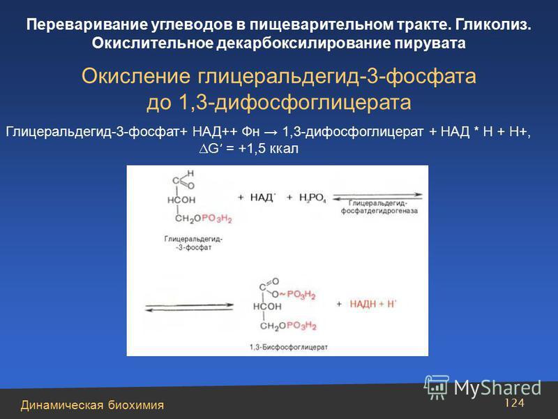 Динамическая биохимия Переваривание углеводов в пищеварительном тракте. Гликолиз. Окислительное декарбоксилирование пирувата 124 Окисление глицеральдегид-3-фосфата до 1,3-дифосфоглицерата Глицеральдегид-3-фосфат+ НАД++ Фн 1,3-дифосфоглицерат + НАД *