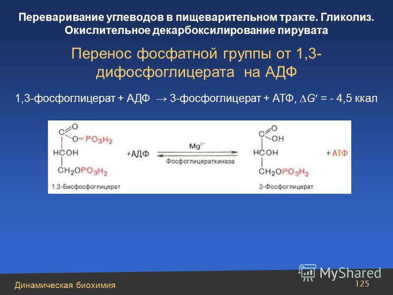 Динамическая биохимия Переваривание углеводов в пищеварительном тракте. Гликолиз. Окислительное декарбоксилирование пирувата 125 Перенос фосфатной группы от 1,3- дифосфоглицерата на АДФ 1,3-фосфоглицерат + АДФ 3-фосфоглицерат + АТФ, G = - 4,5 ккал
