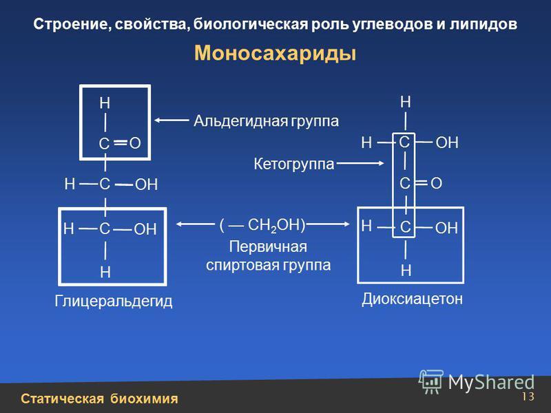 Статическая биохимия Строение, свойства, биологическая роль углеводов и липидов 13 Моносахариды Н Н Н Н Н Н Н Н ОН О О ( СН 2 ОН) С С С С С С Альдегидная группа Кетогруппа Первичная спиртовая группа Глицеральдегид Диоксиацетон