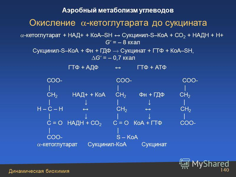 Динамическая биохимия Аэробный метаболизм углеводов 140 -кетоглутарат + НАД+ + КоА–SH Cукцинил-S–КоА + СО 2 + НАДН + Н+ G = – 8 ккал Сукцинил-S–КоА + Фн + ГДФ Сукцинат + ГТФ + КоА–SH, G = – 0,7 ккал ГТФ + АДФ ГТФ + АТФ СОО- COO- COO- | | | CH 2 НАД+