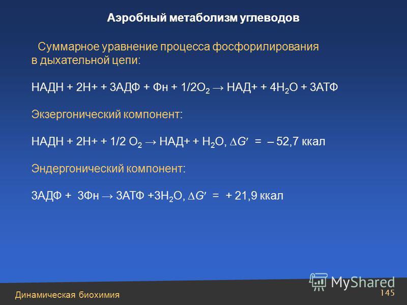 Динамическая биохимия Аэробный метаболизм углеводов 145 Суммарное уравнение процесса фосфорилирования в дыхательной цепи: НАДН + 2Н+ + 3АДФ + Фн + 1/2О 2 НАД+ + 4Н 2 О + 3АТФ Экзергонический компонент: НАДН + 2Н+ + 1/2 О 2 НАД+ + Н 2 О, G = – 52,7 кк