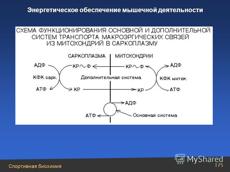 Спортивная биохимия 175 Энергетическое обеспечение мышечной деятельности