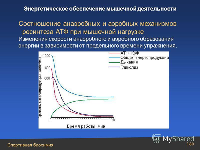 Спортивная биохимия 180 Энергетическое обеспечение мышечной деятельности Соотношение анаэробных и аэробных механизмов ресинтеза АТФ при мышечной нагрузке Изменения скорости анаэробного и аэробного образования энергии в зависимости от предельного врем