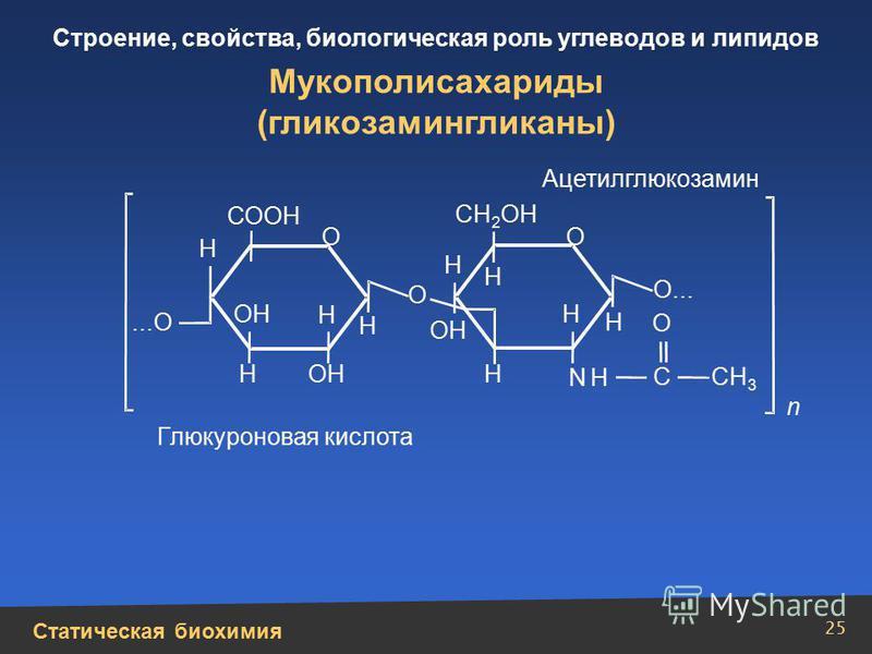 Статическая биохимия Строение, свойства, биологическая роль углеводов и липидов 25 Мукополисахариды (гликозаминогликаны) Н Н Н Н Н Н Н NН Н Н ОН...О О О О О О... СООН СН 2 ОН С СН 3 n Ацетилглюкозамин Глюкуроновая кислота