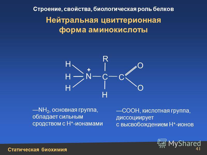 Статическая биохимия Строение, свойства, биологическая роль белков 41 Н Н N Н Н + О О С С R Нейтральная цвиттерионная форма аминокислоты NH 2, основная группа, обладает сильным сродством с Н + -ионамами СООН, кислотная группа, диссоциирует с высвобож