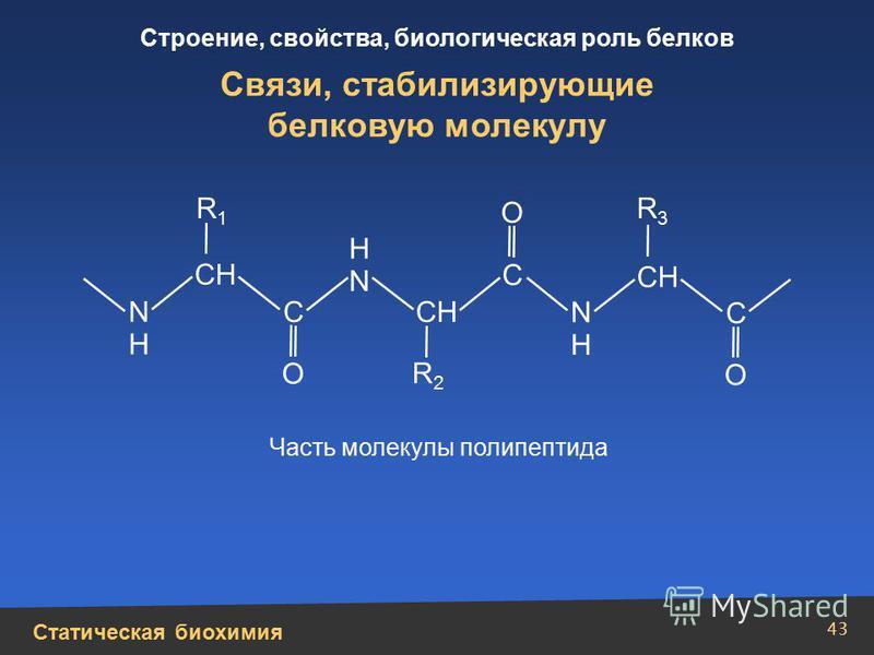 Статическая биохимия Строение, свойства, биологическая роль белков 43 Связи, стабилизирующие белковую молекулу N Н N Н Н N О О О С С СН С Часть молекулы полипептида R1R1 R2R2 R3R3