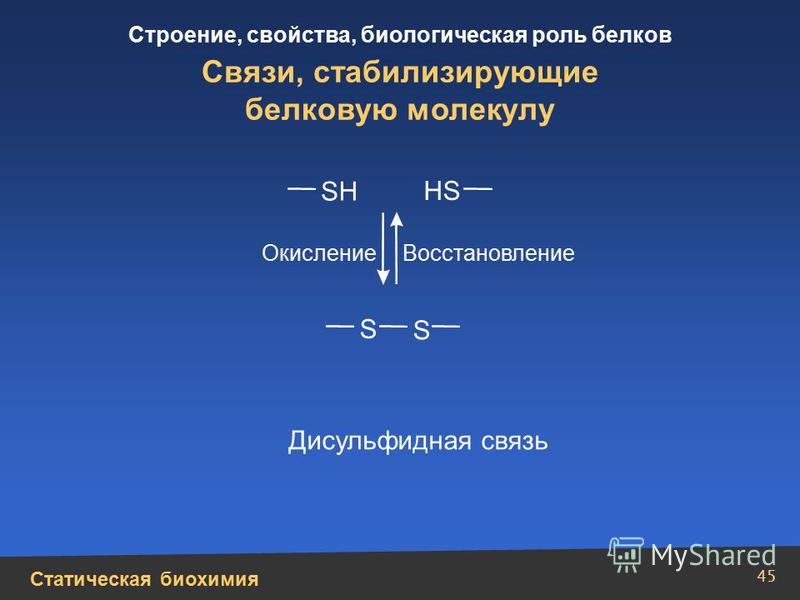 Статическая биохимия Строение, свойства, биологическая роль белков 45 Связи, стабилизирующие белковую молекулу SН S S НS Дисульфидная связь Окисление Восстановление