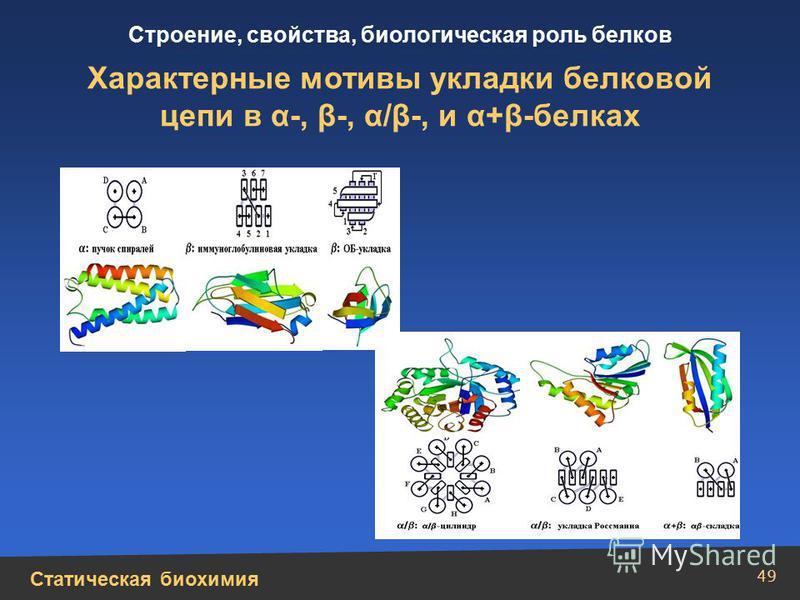Статическая биохимия Строение, свойства, биологическая роль белков 49 Характерные мотивы укладки белковой цепи в α-, β-, α/β-, и α+β-белках