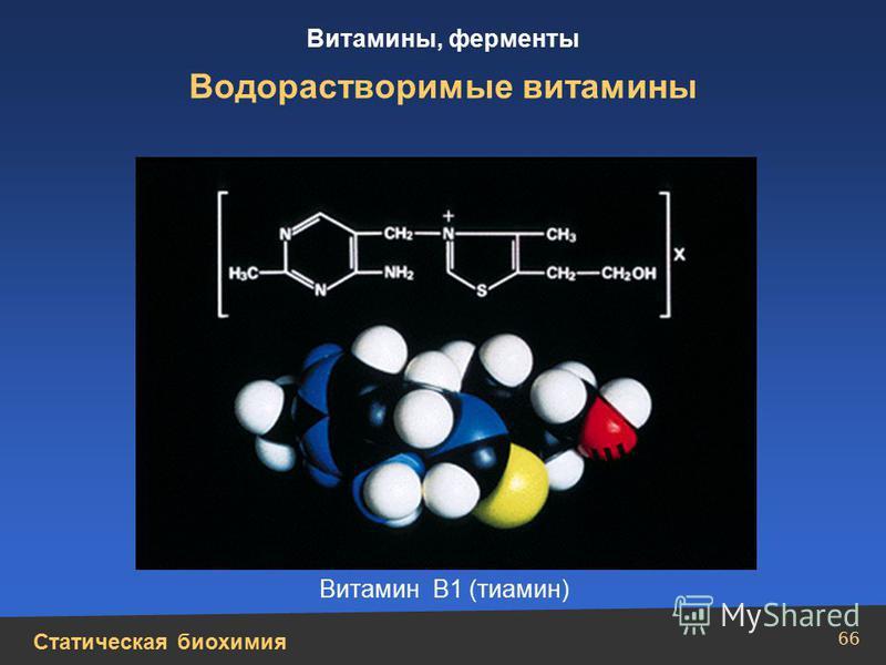 Статическая биохимия Витамины, ферменты 66 Водорастворимые витамины Витамин В1 (тиамин)