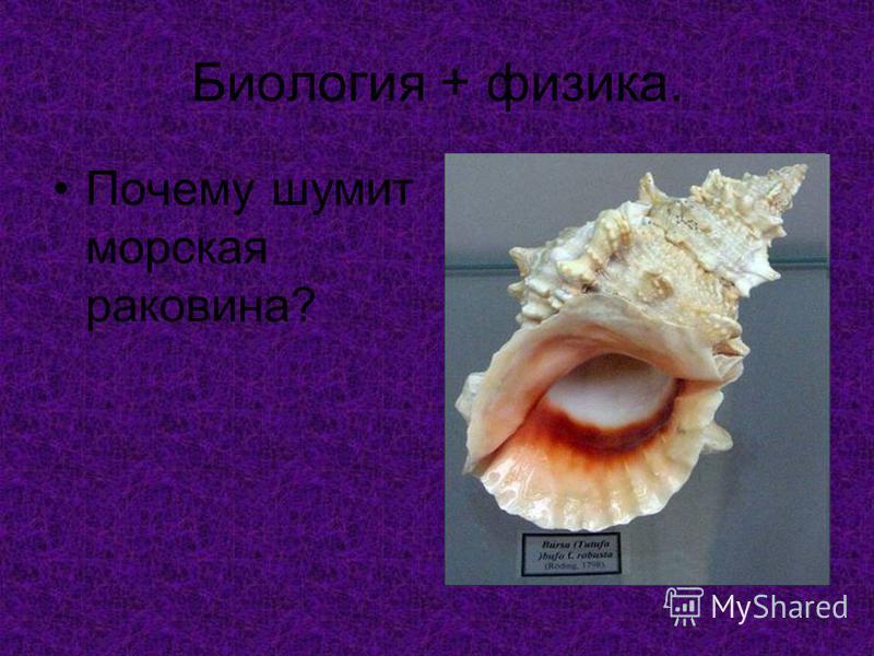 Биология + физика. Почему шумит морская раковина?