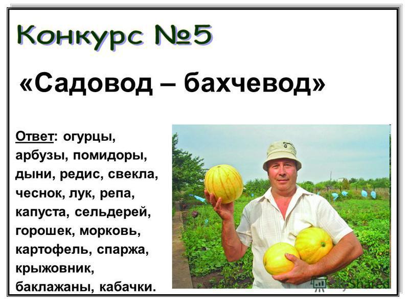 «Садовод – бахчевод» Ответ: огурцы, арбузы, помидоры, дыни, редис, свекла, чеснок, лук, репа, капуста, сельдерей, горошек, морковь, картофель, спаржа, крыжовник, баклажаны, кабачки.