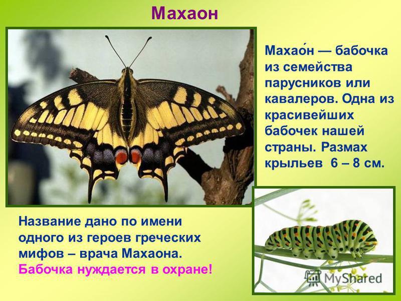 Монарх Монарх (данаида) одна из самых удивительных в мире бабочек. Окраска оранжево-желтая, с черным рисунком и белыми точками. Она настоящая рекордсменка по дальности перелетов. Осенью монархи со всей Северной Америки летят широким фронтом на юг, пр