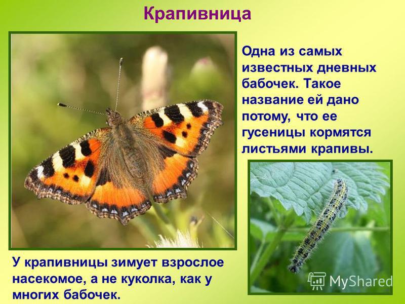 Бабочки дневные… и ночьые