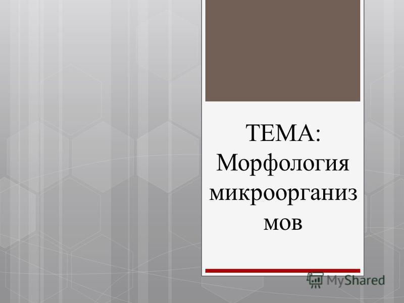 ТЕМА: Морфология микроорганизмов