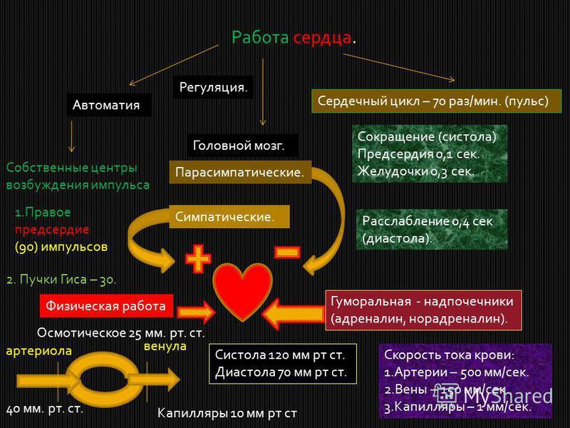 Работа сердца. Сердечный цикл – 70 раз/мин. (пульс) Сокращение (систола) Предсердия 0,1 сек. Желудочки 0,3 сек. Расслабление 0,4 сек (диастола). Регуляция. Головной мозг. Парасимпатические. Симпатические. Физическая работа Гуморальная - надпочечники