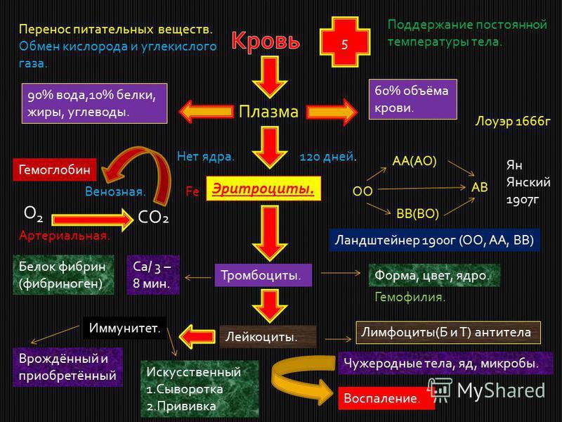5 Перенос питательных веществ. Обмен кислорода и углекислого газа. Поддержание постоянной температуры тела. Плазма 90% вода,10% белки, жиры, углеводы. 60% объёма крови. Эритроциты. Нет ядра.120 дней. Гемоглобин О 2 СО 2 Венозная. Артериальная. FeОО А