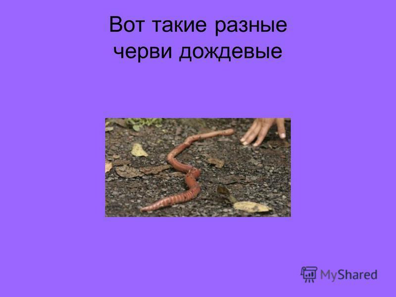 Вот такие разные черви дождевые