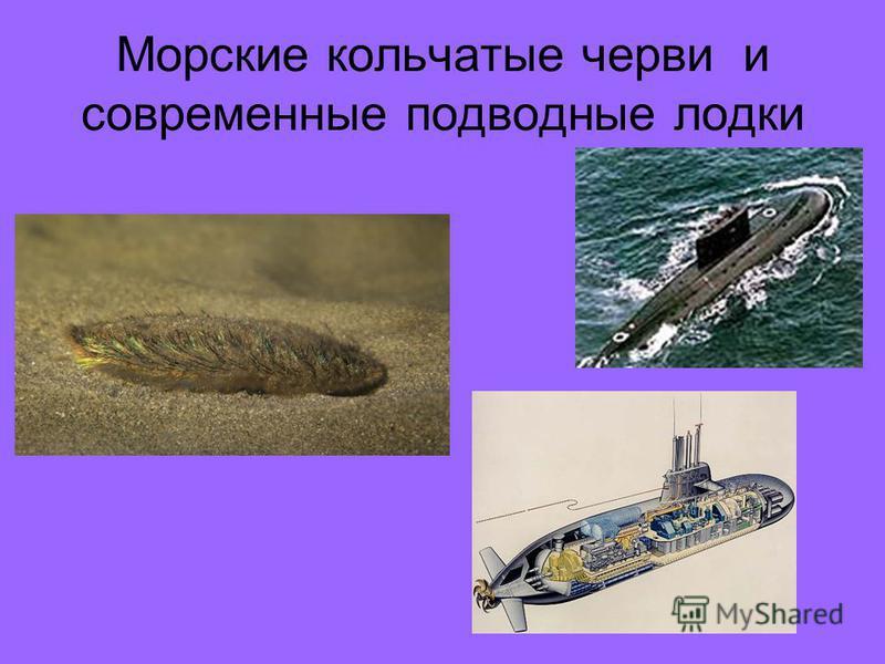 Доклад по биологии 7 класс плоские черви скачать с фотографиями