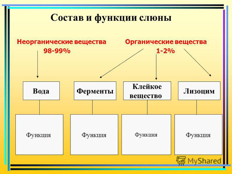 Состав и функции слюны Неорганические вещества Органические вещества 98-99% 1-2% Вода Ферменты Клейкое вещество Лизоцим Функция